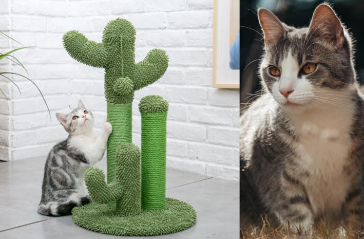 Leuke en de beste krabpaal voor katten