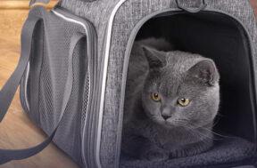 Katten draagtassen