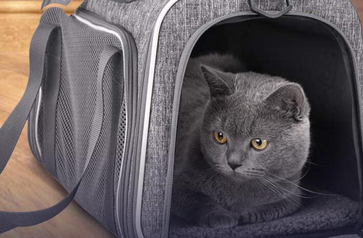 Beste katten draagtas