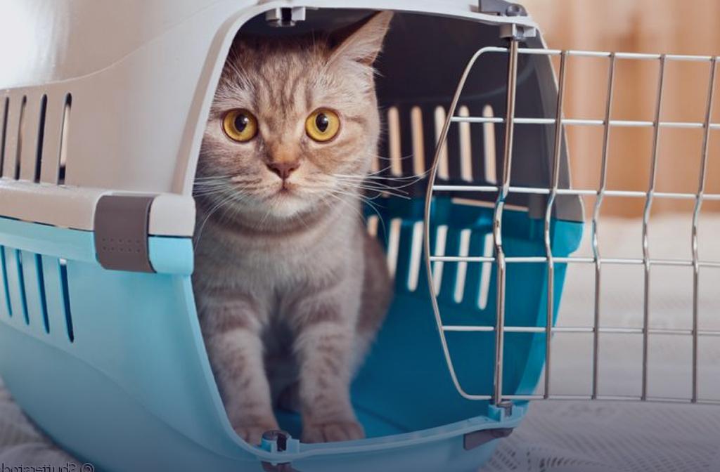 Beste kattenreismand en kattenreistas